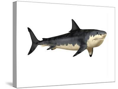 Megalodon Shark, an Enormous Predator from the Cenozoic Era--Stretched Canvas Print