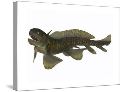 Xenacanthus, a Devonian Freshwater Shark--Stretched Canvas Print