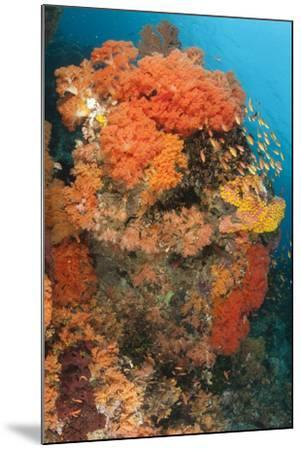 Colorful Reefs Covered in Orange Dendronephthya Soft Corals--Mounted Photographic Print