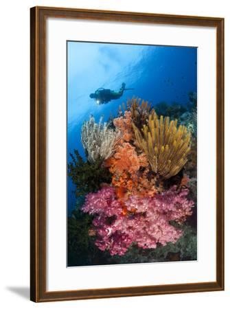 A Diver Approaches Colorful Soft Corals and Crinoids on the Reefs of Raja Ampat--Framed Photographic Print