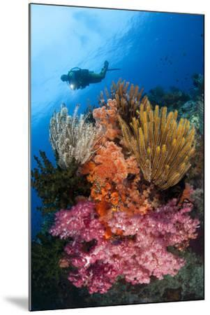 A Diver Approaches Colorful Soft Corals and Crinoids on the Reefs of Raja Ampat--Mounted Photographic Print