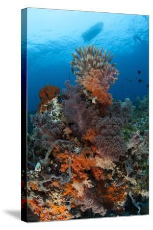 Colorful Crinoids and Soft Corals Adorn a Reef in Raja Ampat--Stretched Canvas Print