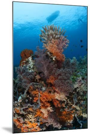 Colorful Crinoids and Soft Corals Adorn a Reef in Raja Ampat--Mounted Photographic Print