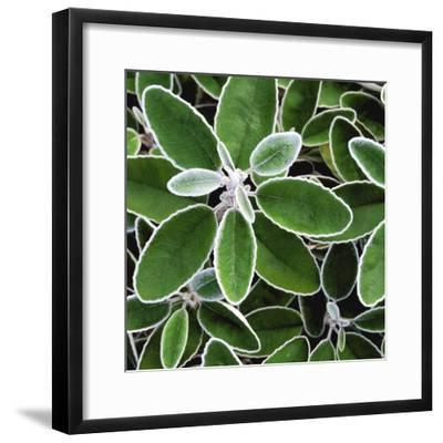 White Edged Shrub-Karen Ussery-Framed Premium Photographic Print