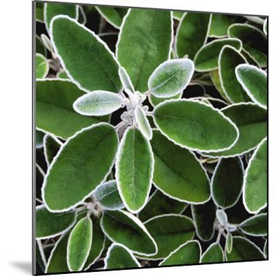 White Edged Shrub-Karen Ussery-Mounted Premium Photographic Print