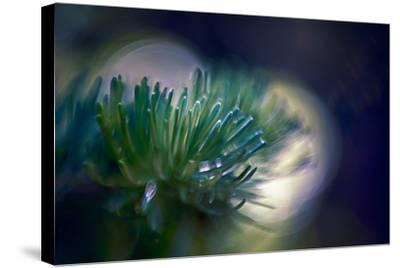 Needles-Ursula Abresch-Stretched Canvas Print