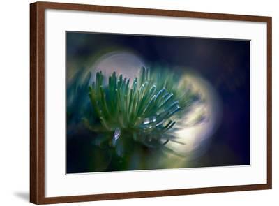 Needles-Ursula Abresch-Framed Photographic Print