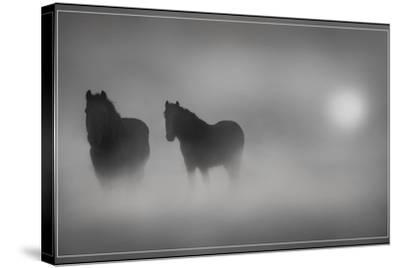 Monochrome Moods-Adrian Campfield-Stretched Canvas Print
