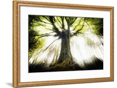 Ponthus Beech 2-Philippe Manguin-Framed Photographic Print