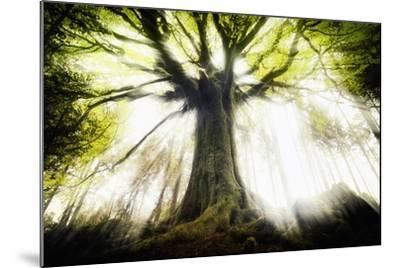 Ponthus Beech 2-Philippe Manguin-Mounted Photographic Print