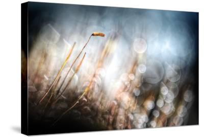 Garden Moss-Ursula Abresch-Stretched Canvas Print