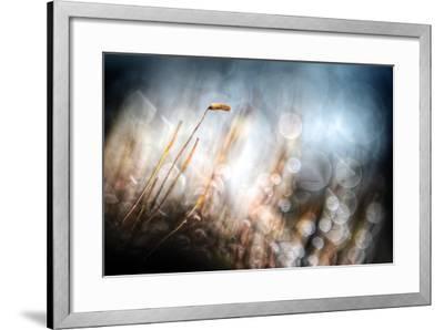 Garden Moss-Ursula Abresch-Framed Photographic Print
