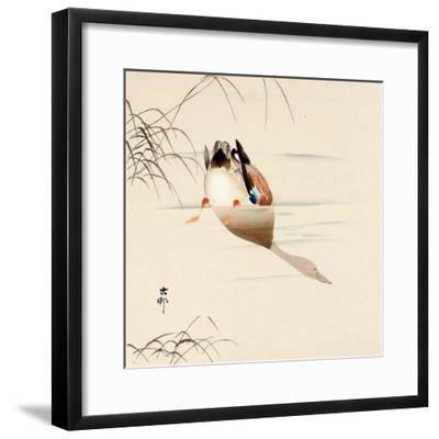 Diving Mallard-Koson Ohara-Framed Giclee Print