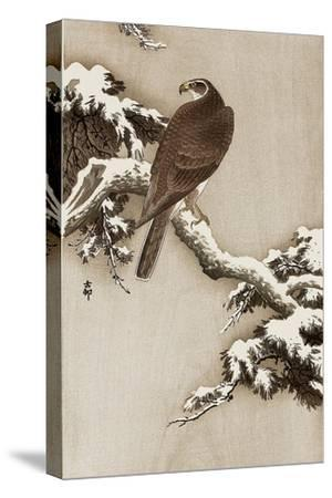 Goshawk on a Snow Covered Pine Branch-Koson Ohara-Stretched Canvas Print