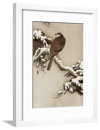 Goshawk on a Snow Covered Pine Branch-Koson Ohara-Framed Giclee Print