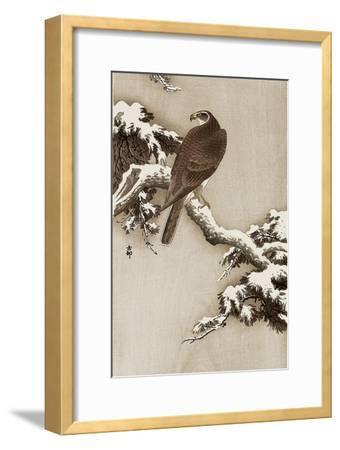 Goshawk on a Snow Covered Pine Branch-Koson Ohara-Framed Giclee Print