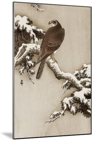 Goshawk on a Snow Covered Pine Branch-Koson Ohara-Mounted Giclee Print