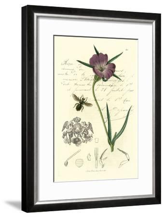 Naturalist's Montage IV-Vision Studio-Framed Art Print