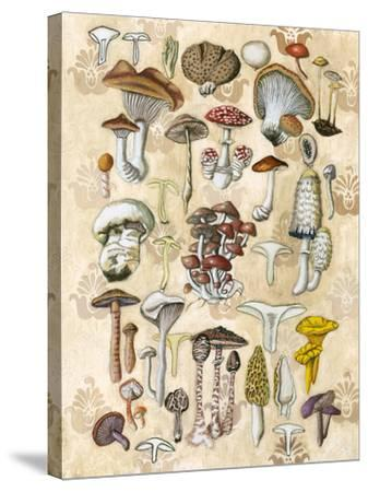 Mycological Study-Naomi McCavitt-Stretched Canvas Print