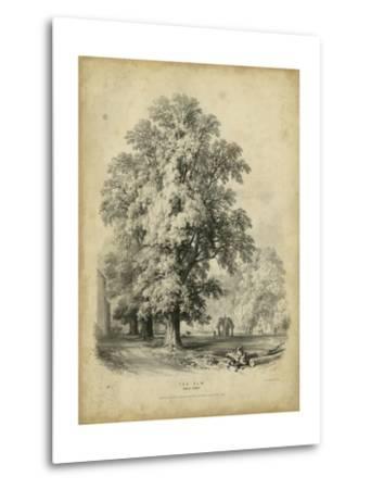 The Elm-George Barnard-Metal Print