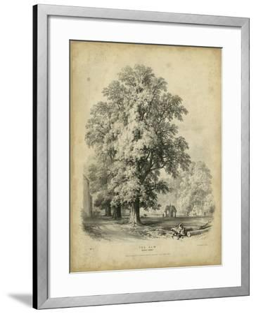 The Elm-George Barnard-Framed Art Print