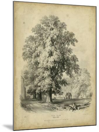 The Elm-George Barnard-Mounted Art Print