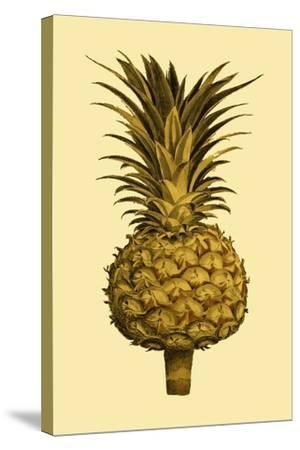 Sepia Pineapple II--Stretched Canvas Print