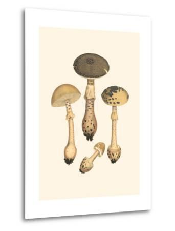 Curtis Mushrooms II-Samuel Curtis-Metal Print