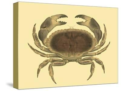 Antique Crab IV-James Sowerby-Stretched Canvas Print