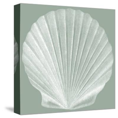 Seabreeze Shells II-Vision Studio-Stretched Canvas Print