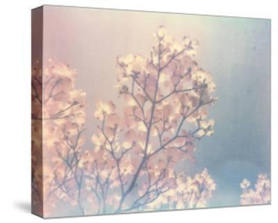 Flowering Dogwood I-Jason Johnson-Stretched Canvas Print