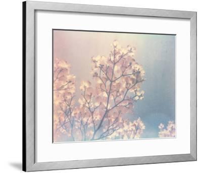 Flowering Dogwood I-Jason Johnson-Framed Art Print
