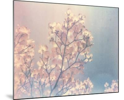 Flowering Dogwood I-Jason Johnson-Mounted Art Print