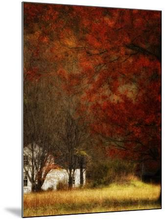 Beyond October's Maple-Danny Head-Mounted Art Print