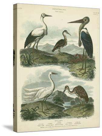 Heron and Crane Species I-Sydenham Teast Edwards-Stretched Canvas Print