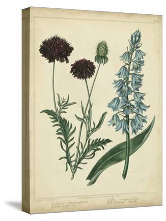Cottage Florals VI-Sydenham Teast Edwards-Stretched Canvas Print