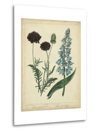Cottage Florals VI-Sydenham Teast Edwards-Metal Print