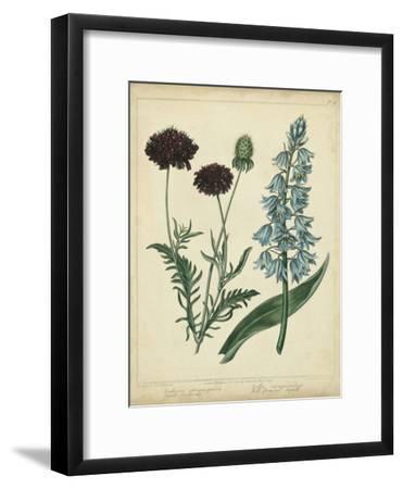 Cottage Florals VI-Sydenham Teast Edwards-Framed Art Print
