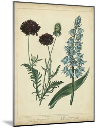 Cottage Florals VI-Sydenham Teast Edwards-Mounted Art Print
