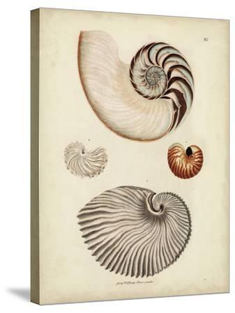 Antique Nautilus II-George Wolfgang Knorr-Stretched Canvas Print
