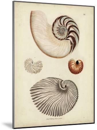 Antique Nautilus II-George Wolfgang Knorr-Mounted Art Print