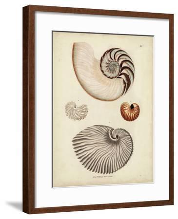 Antique Nautilus II-George Wolfgang Knorr-Framed Art Print