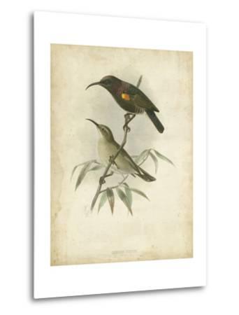 Antique Gould Hummingbird II-John Gould-Metal Print