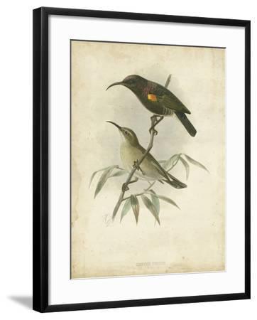 Antique Gould Hummingbird II-John Gould-Framed Art Print