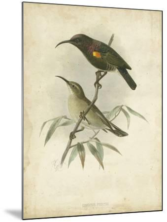 Antique Gould Hummingbird II-John Gould-Mounted Art Print