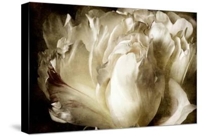 Elegant Peony I-Christine Zalewski-Stretched Canvas Print
