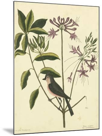 Catesby Bird and Botanical I-Mark Catesby-Mounted Art Print