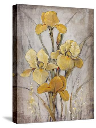 Golden Irises I-Tim O'toole-Stretched Canvas Print