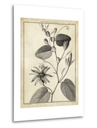 Passiflora VI-Charles Francois Sellier-Metal Print