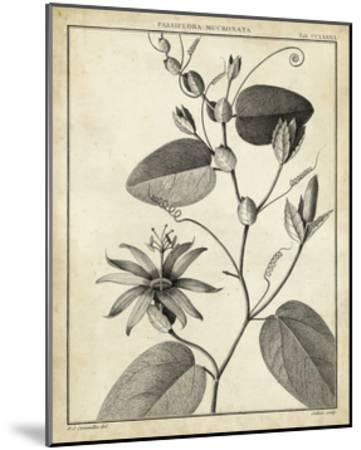 Passiflora VI-Charles Francois Sellier-Mounted Art Print